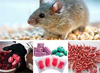 Лучшие средства от крыс и мышей