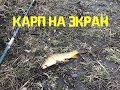ЛОВЛЯ КАРПА НА ЭКРАН