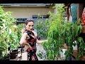 Heghineh Family Vlog #31 - Ծառերս - Heghineh Cooking Show