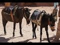 Animals Are Suffering in 'Lost City' of Petra