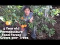5 Year Old Permaculture Food Forest Grows 300+ Trees on 1/3 Acre