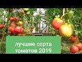 Лучшие сорта томатов 2019/Обзор в моей теплице 14 июля