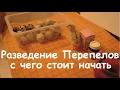 Перепёлкин Александр