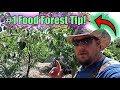 My #1 Tip When Starting A Food Forest!