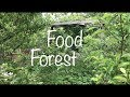 Epic Permaculture Food Forest