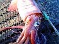 Рыбалка на море кальмар на спининг