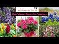 22 Best Heat Tolerant Flowers for Full Sun