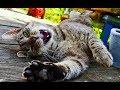 Смешные кошки 2019 Новые приколы с котами и собаками, смешные коты приколы 2019 Видео про кошек #70