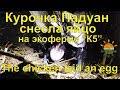 "Курочка Падуан снесла яйцо - экоферма ""К5"""