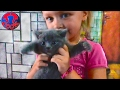 ВЛОГ Маленькая девочка Ярослава играет с котятами и кошками