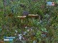 Рекомендуются не всем: на Ямале участились случаи отравления грибами