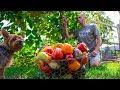 No Dig Gardening Harvest, Backyard Permaculture Food Forest