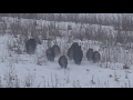 Nature Hunters
