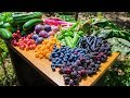 Backyard Gardening Harvest, Sustainable Permaculture Food Forest