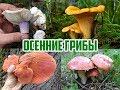 Осенние грибы / Виды осенних грибов / Прогулка в лесу