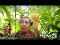 Tour of our Permaculture Food Forest Orchard 2019 🌳