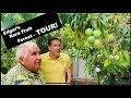 Grow 100+ Rare Fruit Trees   Backyard Orchard    Urban Food Forest