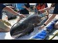 Рыбалка на азовском море супер мега фантастика нереальная