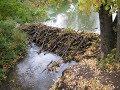 Плотина бобра-влияние бобра на лесную речку (Будни охотника и рыбака)
