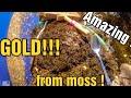 MOTHERLODE MOSS FULL OF GOLD !!! GOLD RUSH