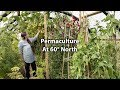 Incredible Abundance in an Extreme Climate (Undercover Permaculture)